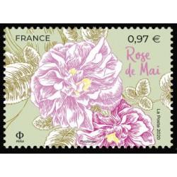 n° 5400 N** Rose de Mai
